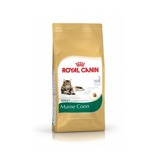 Royal Canin Maine Coon Adult-Maine Coon