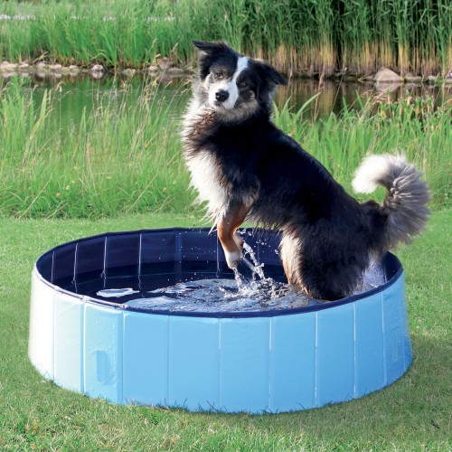 piscine pour chien piscine pour chien trixie wanimo. Black Bedroom Furniture Sets. Home Design Ideas