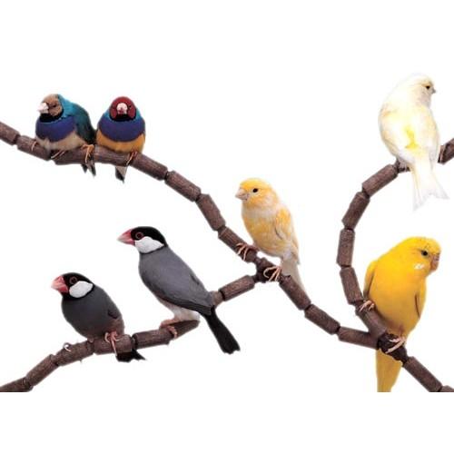 Accessoires pour cages - Perchoirs Flex pour oiseaux