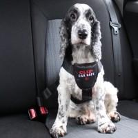Accueillir son chiot - Harnais de voiture Clix Car Safe