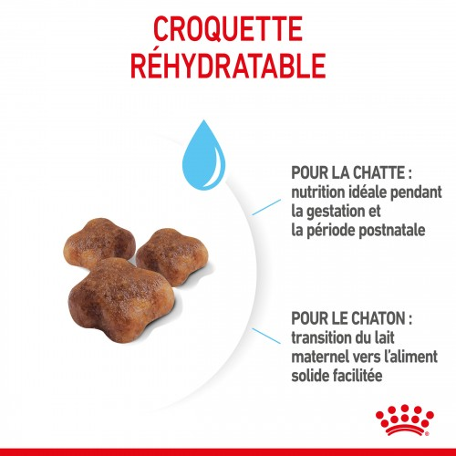 Alimentation pour chat - Royal Canin Mother & BabyCat First Age pour chats