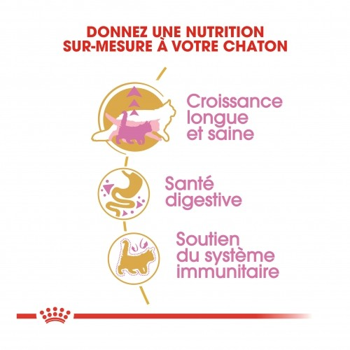 Alimentation pour chat - Royal Canin Maine Coon Kitten pour chats