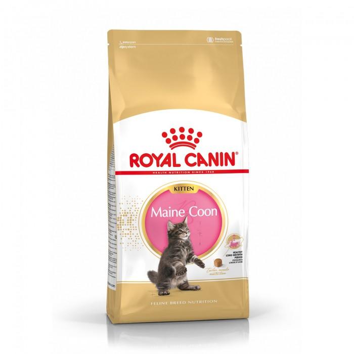 Royal Canin Maine Coon Kitten-Maine Coon Kitten