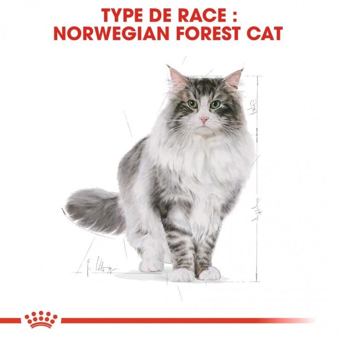 Alimentation pour chat - Royal Canin Norvégien Adult pour chats