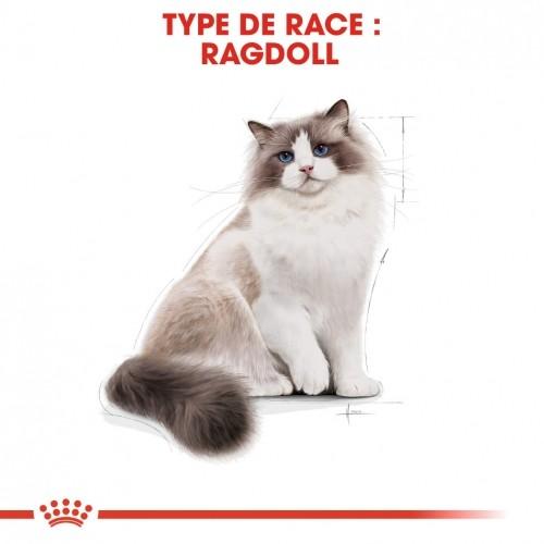 Alimentation pour chat - Royal Canin Ragdoll Adult pour chats
