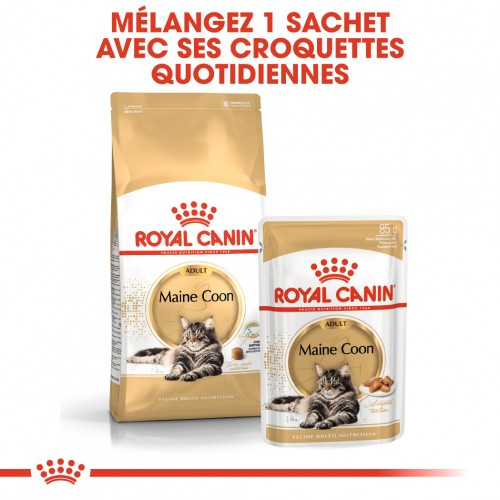 Alimentation pour chat - Royal Canin Maine Coon pour chats