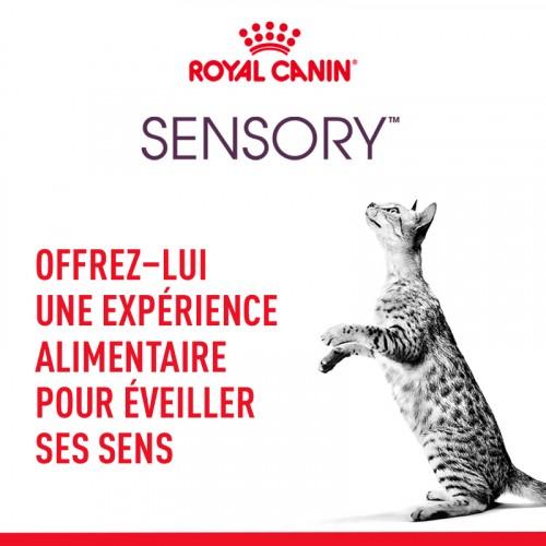 Alimentation pour chat - Royal Canin Sensory Taste pour chats