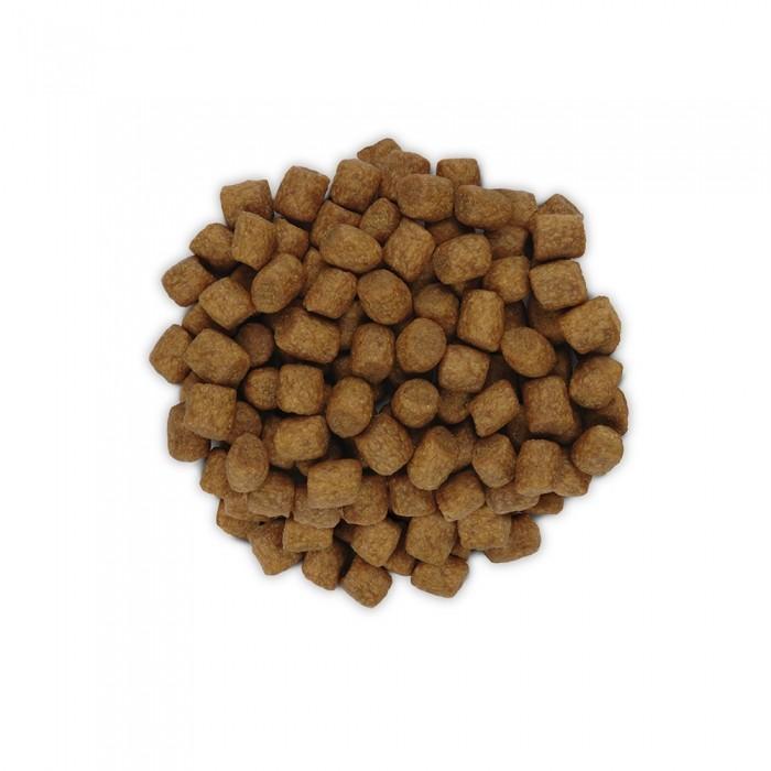Alimentation pour chat - Hill's Prescription Diet z/d Food Sensitivities - Croquettes pour chat pour chats