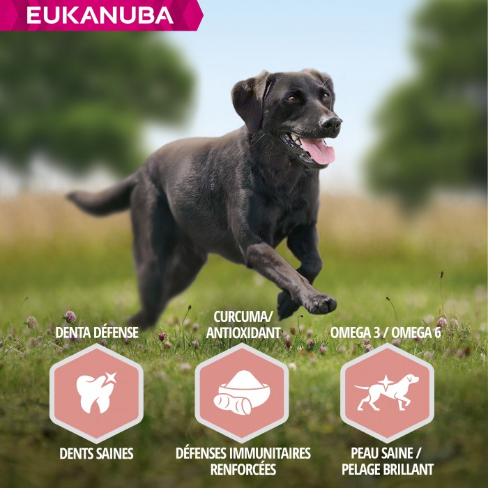 Alimentation pour chien - Eukanuba Senior Large Breed - Agneau et riz pour chiens