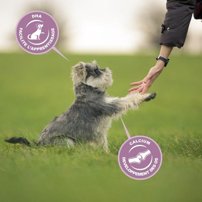 Alimentation pour chien - Eukanuba Growing Puppy Medium Breed - Poulet pour chiens