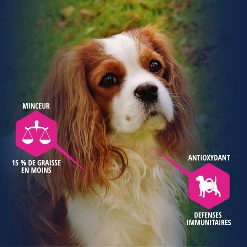 Alimentation pour chien - Eukanuba Daily Care Sterilized & Overweight pour chiens