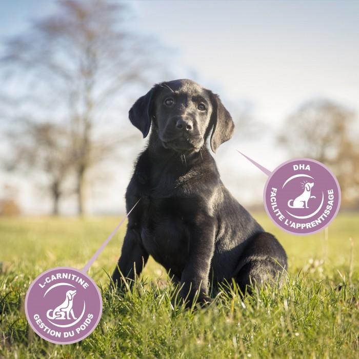 Alimentation pour chien - Eukanuba Growing Puppy Large Giant Breed - Poulet pour chiens