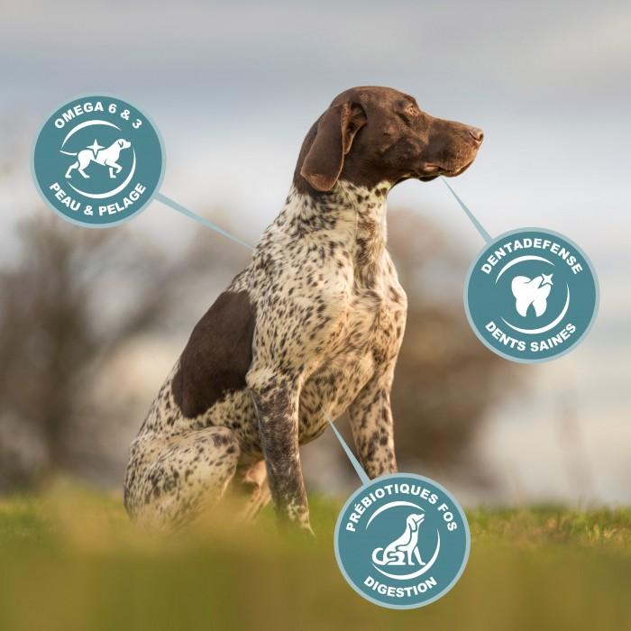 Alimentation pour chien - Eukanuba Active Adult Large Giant Breed pour chiens