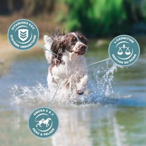 Alimentation pour chien - Eukanuba Active Adult Medium Breed - Poulet pour chiens