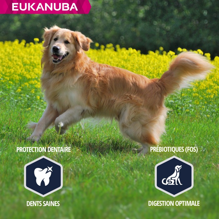 Alimentation pour chien - Eukanuba Golden Retriever pour chiens