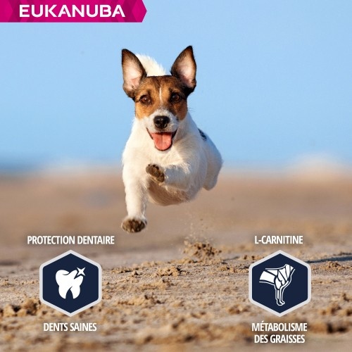 Alimentation pour chien - Eukanuba Jack Russel pour chiens