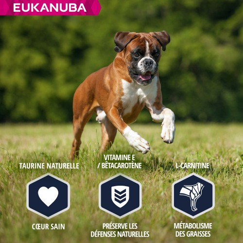 Alimentation pour chien - Eukanuba Breed Specific Boxer pour chiens