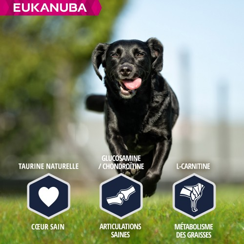 Alimentation pour chien - Eukanuba Breed Specific Labrador Retriever pour chiens