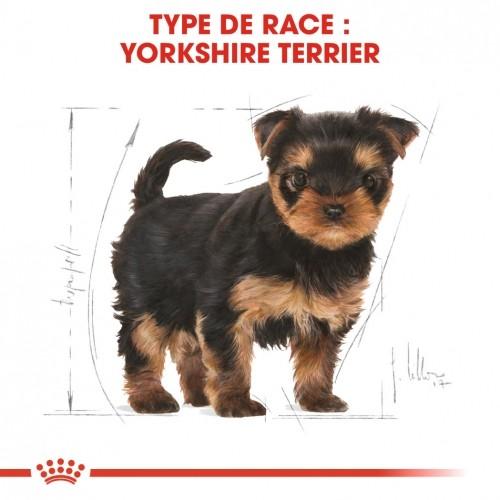 Alimentation pour chien - Royal Canin Yorkshire Terrier Puppy pour chiens