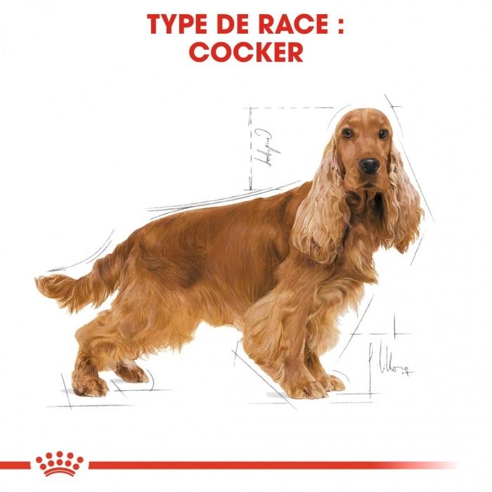 Alimentation pour chien - Royal Canin Cocker Adult pour chiens