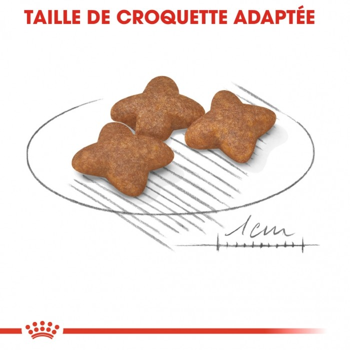 Alimentation pour chien - Royal Canin Mini Adult - Croquettes pouor chien pour chiens