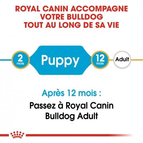 Alimentation pour chien - Royal Canin Bulldog Anglais Puppy - Croquettes pour chiot pour chiens