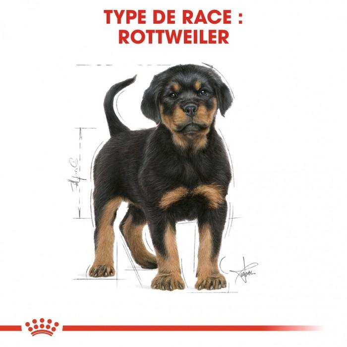 Alimentation pour chien - Royal Canin Rottweiler Puppy pour chiens