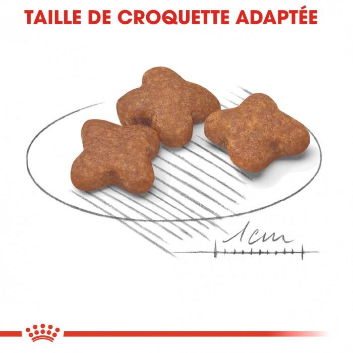 Alimentation pour chien - Royal Canin Mini Adult 8+ pour chiens