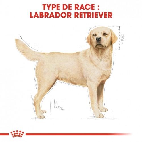 Alimentation pour chien - Royal Canin Labrador Retriever Adult pour chiens