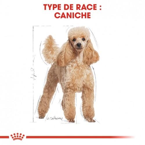 Alimentation pour chien - Royal Canin Caniche Adult (Poodle) pour chiens