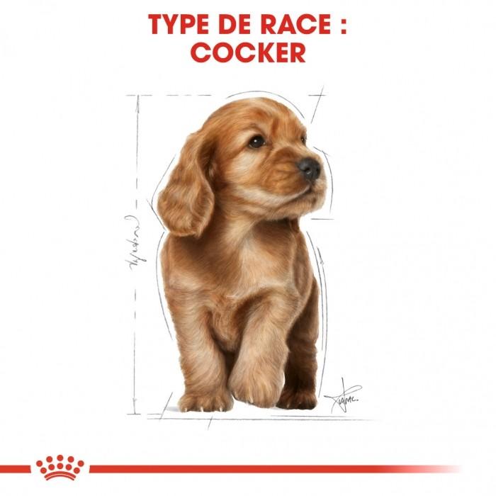 Alimentation pour chien - Royal Canin Cocker Puppy pour chiens