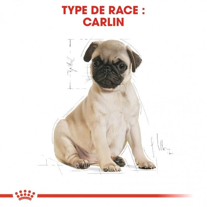 Alimentation pour chien - Royal Canin Carlin Puppy (Pug) pour chiens