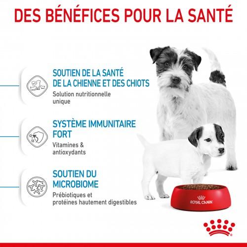 Alimentation pour chien - Royal Canin Mini Starter pour chiens