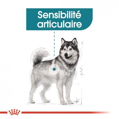Alimentation pour chien - Royal Canin Maxi Joint Care pour chiens