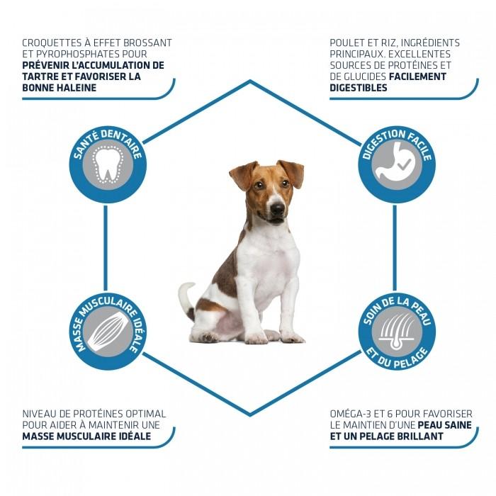 Alimentation pour chien - ADVANCE Mini Adult pour chiens