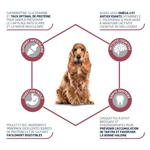 Alimentation pour chien - ADVANCE Medium +7 pour chiens