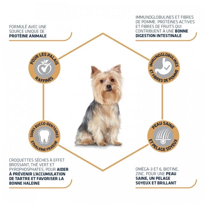 Alimentation pour chien - ADVANCE Yorkshire Terrier pour chiens