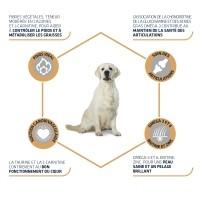 Croquettes pour chien - ADVANCE Labrador