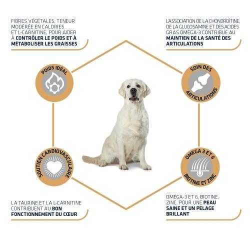 Alimentation pour chien - ADVANCE Labrador pour chiens