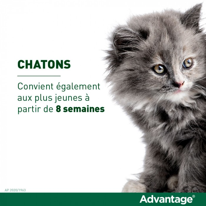 Anti puce chat, anti tique chat - Pipettes Advantage chat pour chats