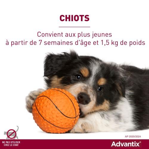Anti puce chien, anti tique chien - Pipettes Advantix chien pour chiens