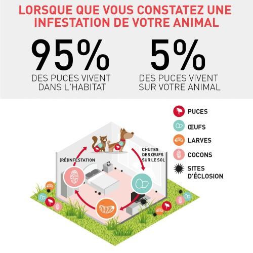 Anti puce chien, anti tique chien - Frontline Spray chien et chat pour chiens