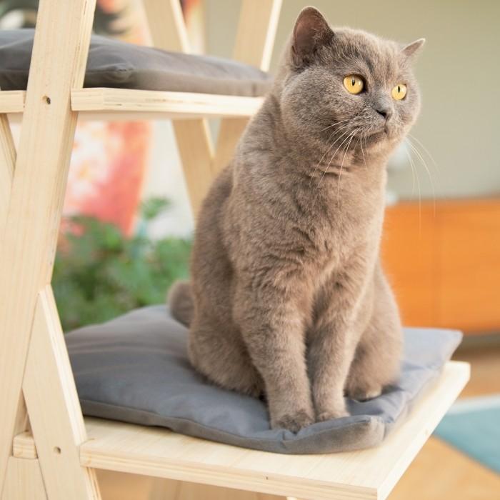 Arbre à chat et griffoir - Arbre à chat Mirza pour chats