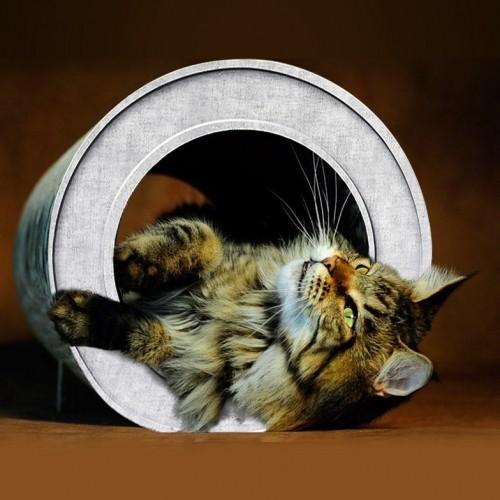 Arbre à chat et griffoir - Griffoir Le Tube pour chats