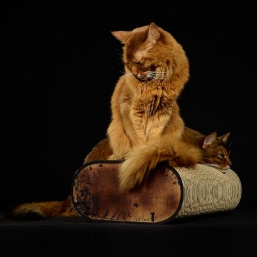 Arbre à chat et griffoir - Griffoir La Banquette pour chats