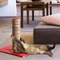 Arbre à chat et griffoir - Griffoir Crazy Cat