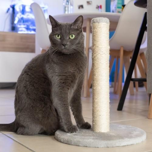 Arbre à chat et griffoir - Poteaux à griffer Simply pour chats