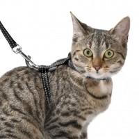 Harnais, collier et laisse pour chaton - Pack chaton Safe Bobby