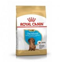 Croquettes pour chien - ROYAL CANIN Breed Nutrition Teckel (Dachshund) junior