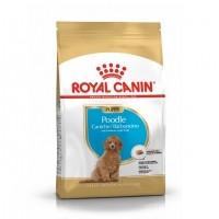 Croquettes pour chien - Royal Canin Caniche Puppy (Poodle) Caniche (Poodle) Junior